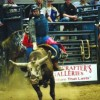 Semiannual Bull Blowout attracts crowd