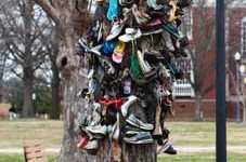 Nicole Ely/The News The Shoe Tree was moved just a few feet away from its previous location after becoming a safety concern, but the tree has moved a few times since the start of the tradition in the 1960s.